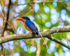 Bird Watching in the Daintree - Red Mill House B&B Daintree Accommodation