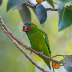 Bird Watching Tour Cairns and Port Douglas North Queensland | Parrots