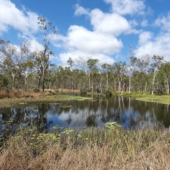 Bird Watching Tour | Shared Earth Reserve Mareeba