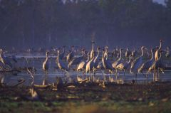 Birdwatching - Jabiru Safari Lodge Cairns' Atherton Tablelands