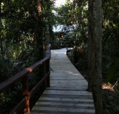 Daintree Rainforest Boardwalks