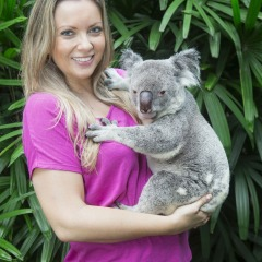 Book a photo with a koala at the Wildlife Habitat