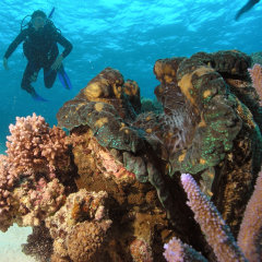 Book a Scuba dive master for your private charter to explore the reef