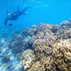 Book snorkeling and scuba diving for your group on the Great Barrier Reef pontoon