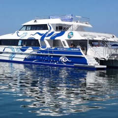 Brand New Reef Boat | Snorkel & Dive Up To 3 Times At 2 Reef Locations | Great Barrier Reef Day Trip