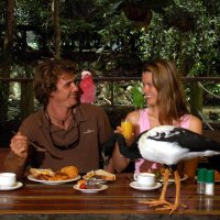 Breakfast with the Birds or Lunch with Lorikeets at Wildlife Habitat Port Douglas