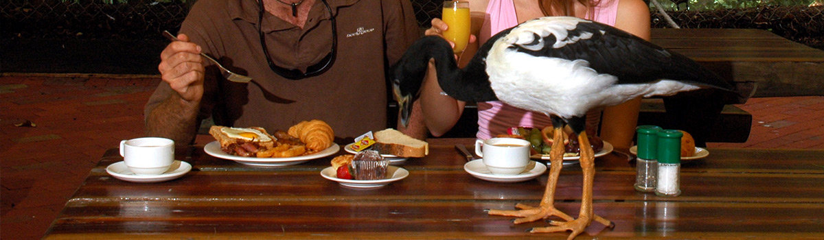 Breakfast with the Birds Port Douglas & Cape Tribulation Daintree Day tour