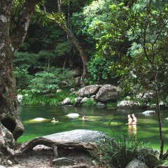 Mossman Gorge and Daintree Rainforest are popular for Group tours