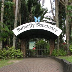 Butterfly Sanctuary | Kuranda Day tour