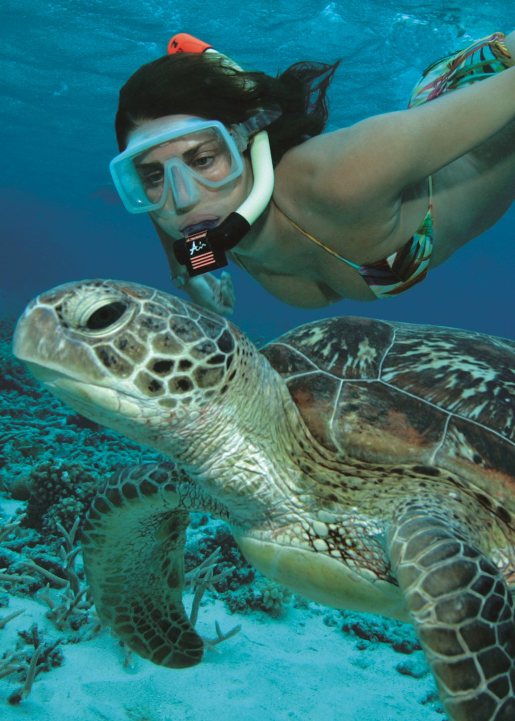 palm cove great barrier reef tours