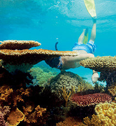 Cairns Attractions - Things To Do - Things To See - In Cairns