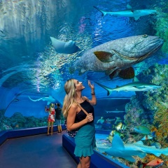 Walk thru the Cairns Aquarium and see the marine life of the Great Barrier Reef
