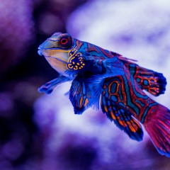 See beautiful fish like this one at the Cairns Aquarium