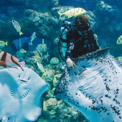 See the stingrays and eagle rays being fed at the Cairns Aquarium