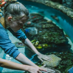 Cairns Aquarium | Marine Touch Tank