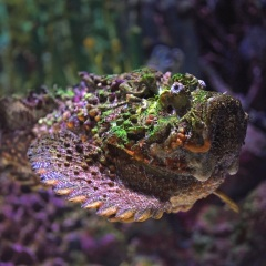 Cairns Aquarium | Saltwater Stone-fish Photo by David Clode