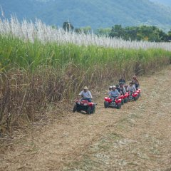 Cairns ATV and quad bike tours on our sugar cane farm