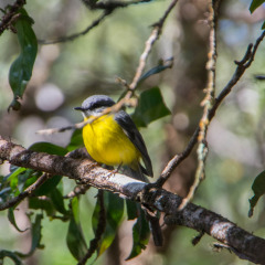 Cairns Bird watching tours