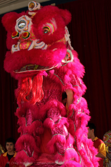 Cairns Attractions | Cairns Chinese New Year 2020 | Cairns Attractions