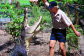 Cairns Crocodile Tours | Handler Feeding a Crocodile