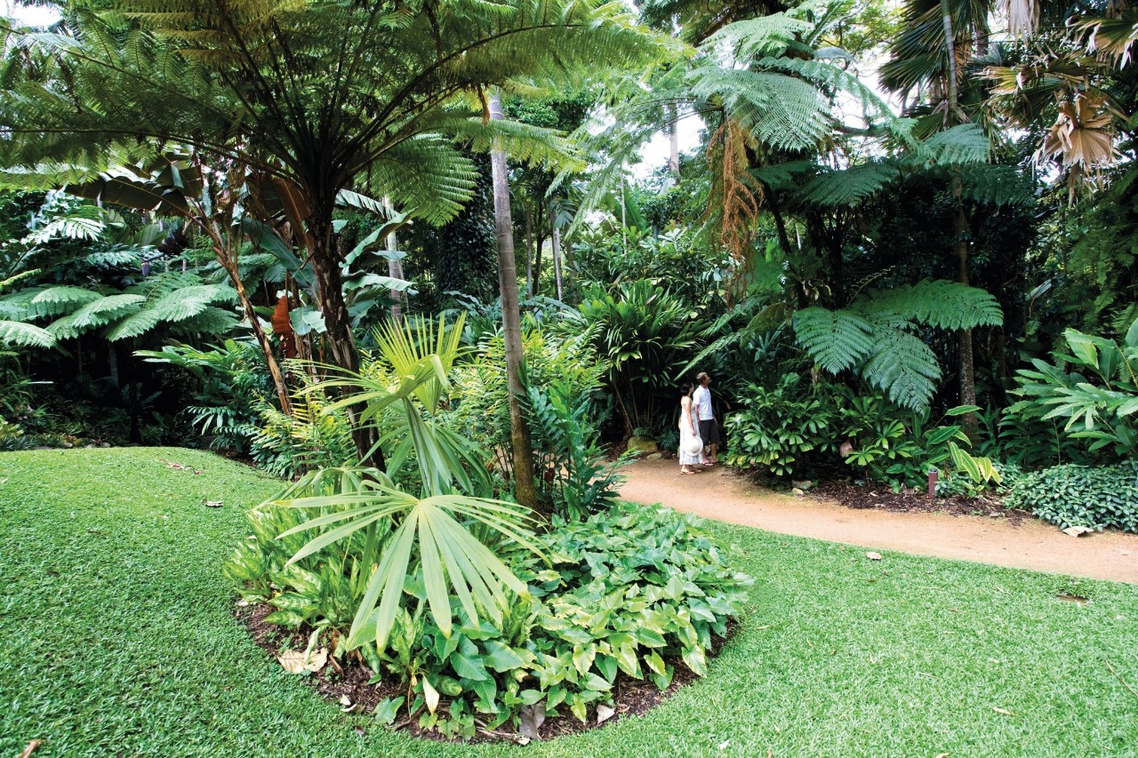 Cairns attractions cairns botanical gardens attractions for Au jardin restaurant botanic gardens