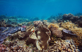 Cairns Great Barrier Reef Australia