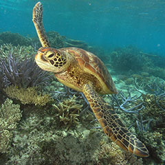 Cairns Great Barrier Reef Tours