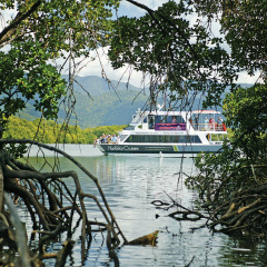 Cairns Harbour Cruise | Mangrove