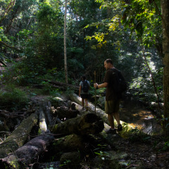 Cairns Hiking Tours - Mountain Treks - Wildlife Tours