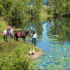 Cairns horse riding tours - cane farm Billabong