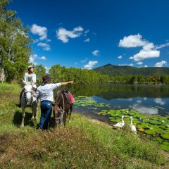 Cairns Horse Riding Tours - Yorkeys Knob Horse Riding