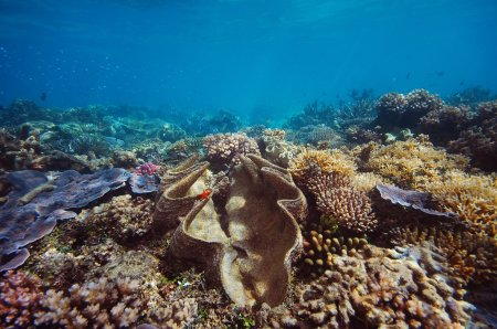 Cairns & Port Douglas Great Barrier Reef Tips