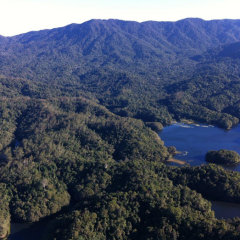 Cairns privae charter helicopter scenic flight over the rainforests