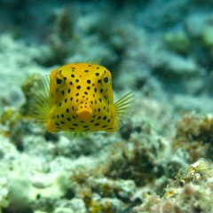 Cairns Reef Tours - Hello Happy