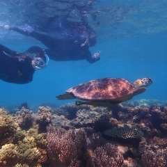 Cairns Snorkel Tours - Snorkel with Turtles Michaelmas Cay
