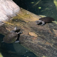Cairns Volcano Craters are home to turtles