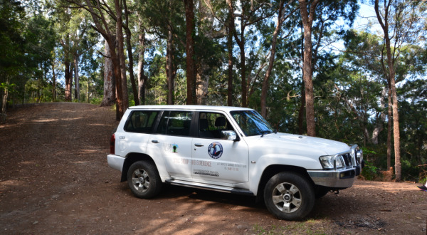 Cairns Wildlife Tours 4WD - Small Group Tours