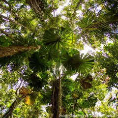 Canopy Daintree Rainforest - Aboriginal Cultural Tour