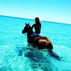 Cape Trib Beach Horse Rides - Swim in The Ocean with Your Horse