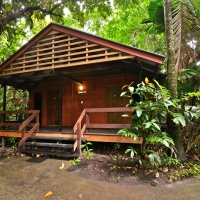 Cape Trib Beach House - Cabins & Dorm Accommodation at Cape Tribulation Beach