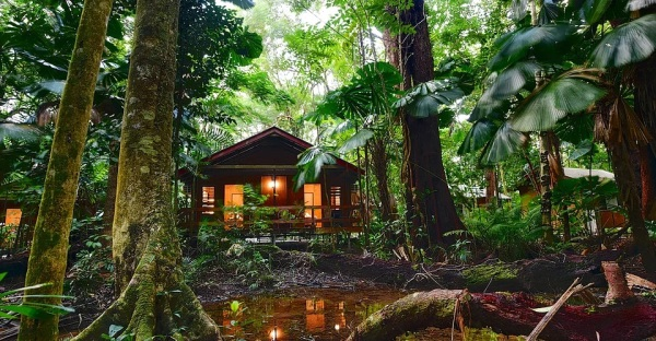 Cape Trib Beah House | Rainforest Cabin Style Accommodation | Daintree Rainforest Retreat Qld
