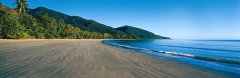 Cape Tribulation Beach - Ferntree