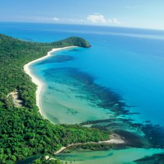 Cape Tribulation Beach | 1 Day Tour | Depart Port Douglas Queensland