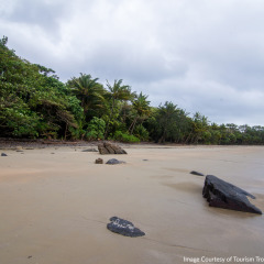 Cape Tribulation Beach Daintree - Aboriginal Cultural Tour