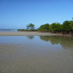 Cape Tribulation Beach Far North Queensland