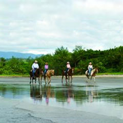 Cape Tribulation Beach Horse Rides