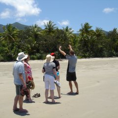 Full Day Daintree Tour From Port Douglas Tropical North Queensland | Visit Cape Tribulation Beach | Small Group
