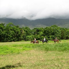 Cape Tribulation Horse Rides | 1.5 hours Horse Ride Through The Daintree Onto Cape Tribulation Beach
