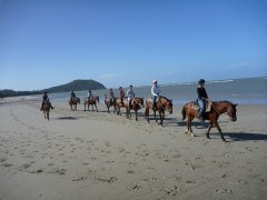 Cape Tribulation Horse Rides Day Activity