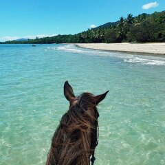 Cape Tribulation Horse Rides on the Beach